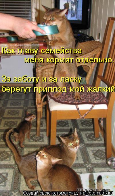 Котоматрица: Как главу семейства меня кормят отдельно. За заботу и за ласку берегут приплод мой жалкий.