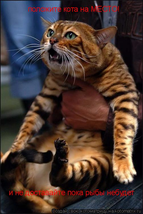 Котоматрица: положите кота на МЕСТО! и не доставайте пока рыбы небудет
