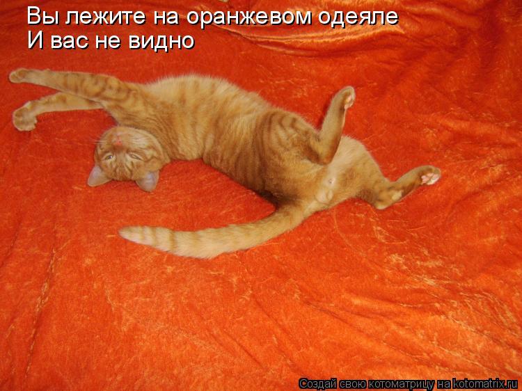 Котоматрица: Вы лежите на оранжевом одеяле И вас не видно