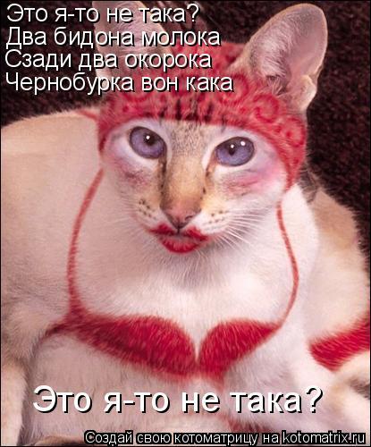 Котоматрица: Это я-то не така? Два бидона молока Сзади два окорока Чернобурка вон кака Это я-то не така?