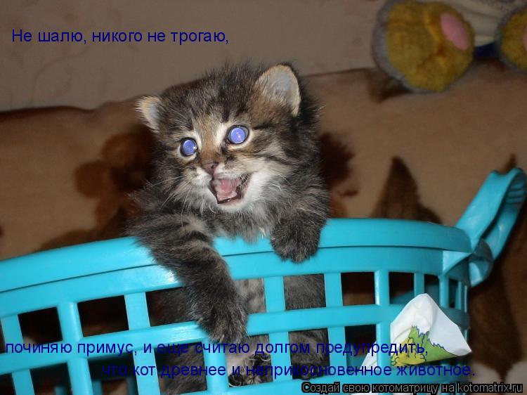 Котоматрица: Не шалю, никого не трогаю, починяю примус, и еще считаю долгом предупредить, что кот древнее и неприкосновенное животное.