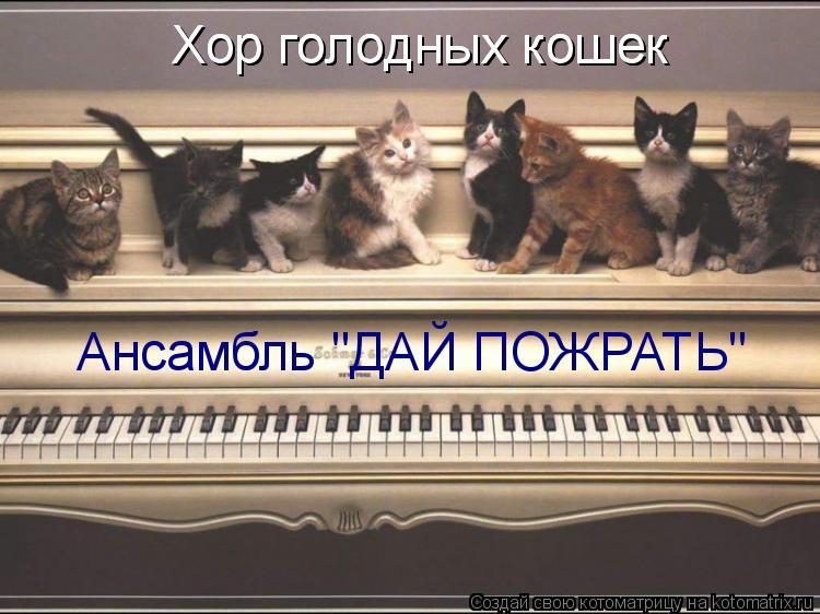 """Котоматрица: Хор голодных кошек Хор голодных кошек Ансамбль """"ДАЙ ПОЖРАТЬ"""""""