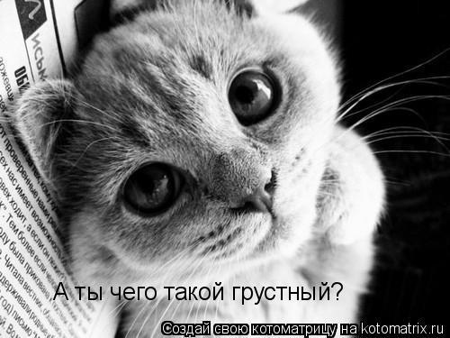 Котоматрица: А ты чего такой грустный?