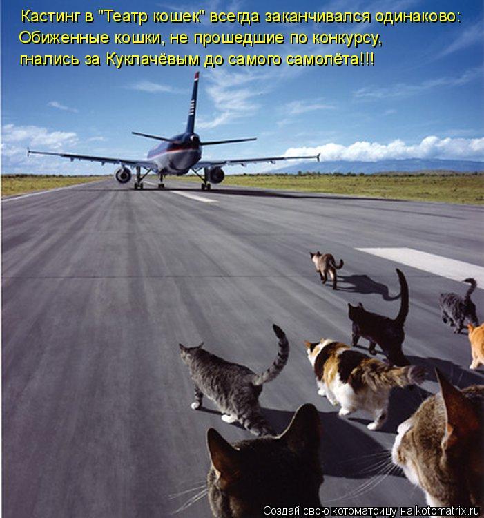 """Котоматрица: Кастинг в """"Театр кошек"""" всегда заканчивался одинаково: Обиженные кошки, не прошедшие по конкурсу, гнались за Куклачёвым до самого самолёта!!"""