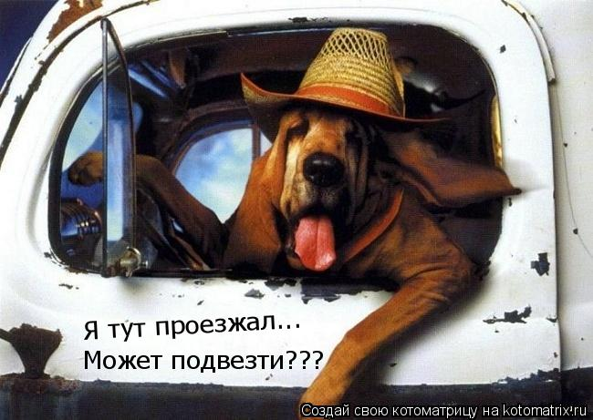Котоматрица: Я тут проезжал... Может подвезти???