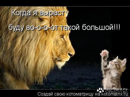 Котоматрица: Когда я вырасту буду во-о-о-от такой большой!!!