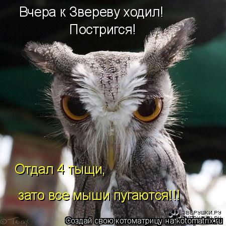 Котоматрица: Вчера к Звереву ходил! Постригся! Отдал 4 тыщи, зато все мыши пугаются!!!