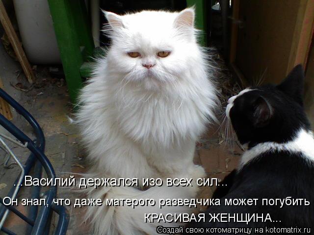 Котоматрица: ...Василий держался изо всех сил...  КРАСИВАЯ ЖЕНЩИНА... Он знал, что даже матерого разведчика может погубить