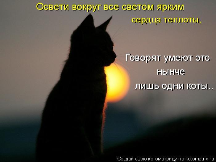 Котоматрица: Говорят умеют это нынче лишь одни коты.. Освети вокруг все светом ярким  сердца теплоты,