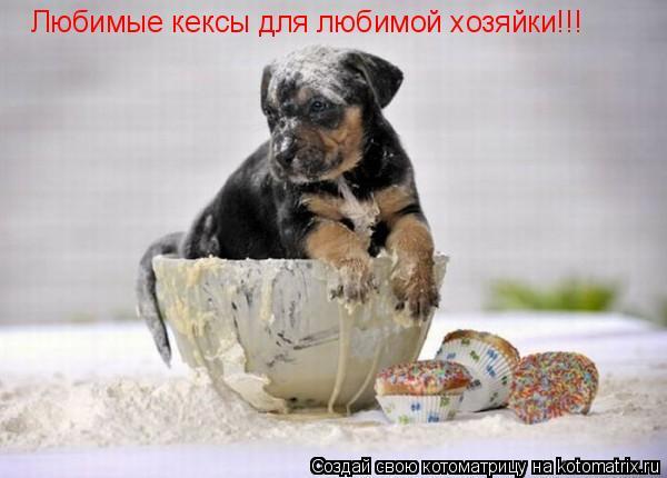 Котоматрица: Любимые кексы для любимой хозяйки!!!