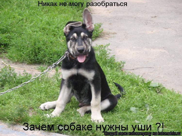 Котоматрица: Никак не могу разобраться Зачем собаке нужны уши ?!