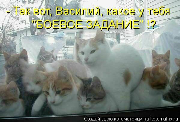 """Котоматрица: - Так вот, Василий, какое у тебя """"БОЕВОЕ ЗАДАНИЕ"""" !?"""
