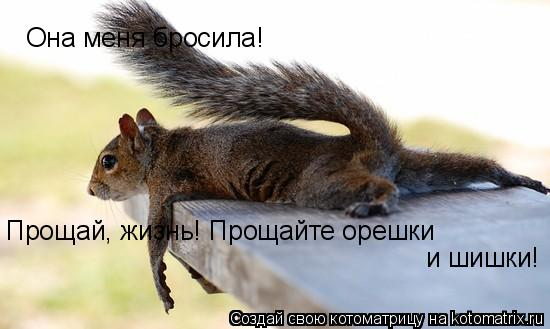 Котоматрица: Она меня бросила! Прощай, жизнь! Прощайте орешки и шишки!
