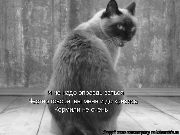 Котоматрица: И не надо оправдываться Честно говоря, вы меня и до кризиса Кормили не очень