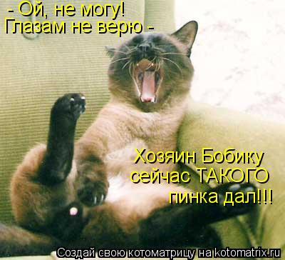 Котоматрица: - Ой, не могу! Глазам не верю - Хозяин Бобику сейчас ТАКОГО пинка дал!!!
