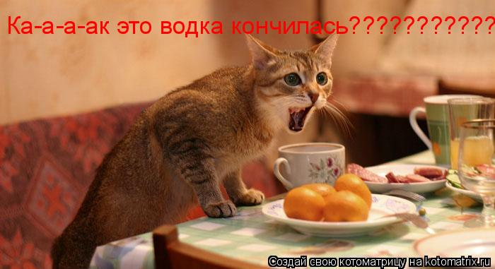 Котоматрица: Ка-а-а-ак это водка кончилась???????????