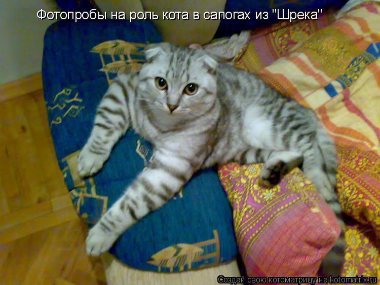 """Котоматрица: Фотопробы на роль кота в сапогах из """"Шрека"""""""