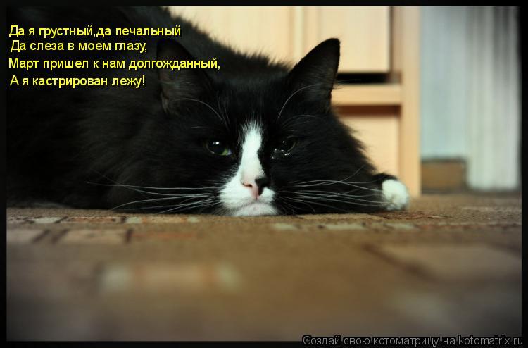 Котоматрица: Да я грустный,да печальный Да слеза в моем глазу, Март пришел к нам долгожданный, А я кастрирован лежу!