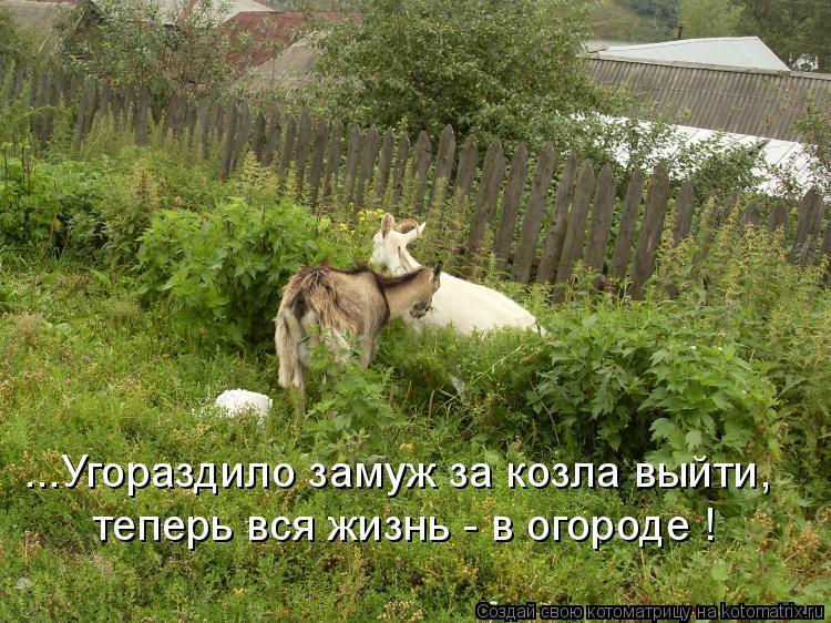 Котоматрица: ...Угораздило замуж за козла выйти, теперь вся жизнь - в огороде !