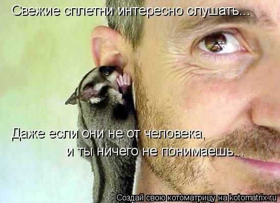 Котоматрица: Свежие сплетни интересно слушать... Даже если они не от человека, и ты ничего не понимаешь...