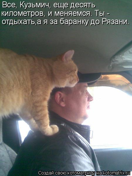 Котоматрица: Все, Кузьмич, еще десять  километров, и меняемся. Ты -  отдыхать,а я за баранку до Рязани.