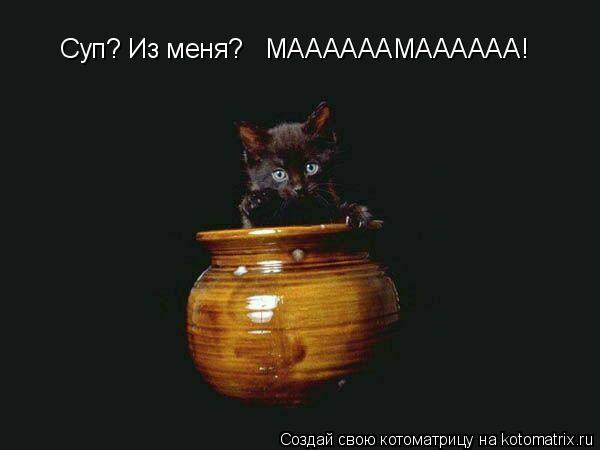 Котоматрица: Суп? Из меня?   МААААААМАААААА!