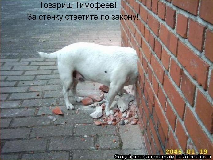 Котоматрица: Товарищ Тимофеев!  За стенку ответите по закону!