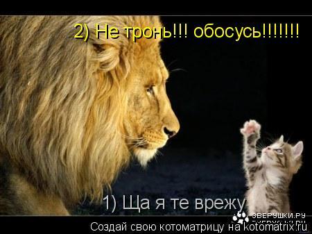 Котоматрица: 1) Ща я те врежу 2) Не тронь!!! обосусь!!!!!!!
