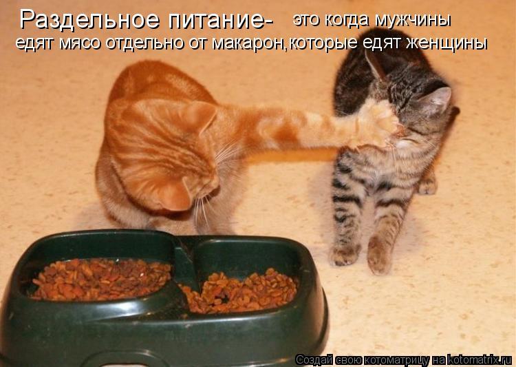 Котоматрица: Раздельное питание- это когда мужчины едят мясо отдельно от макарон,которые едят женщины