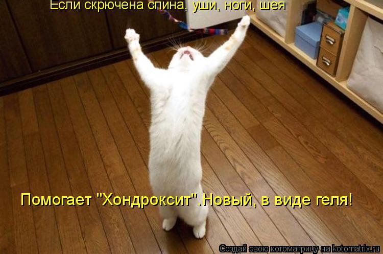 """Котоматрица: Если скрючена спина, уши, ноги, шея Помогает """"Хондроксит"""".Новый, в виде геля!"""