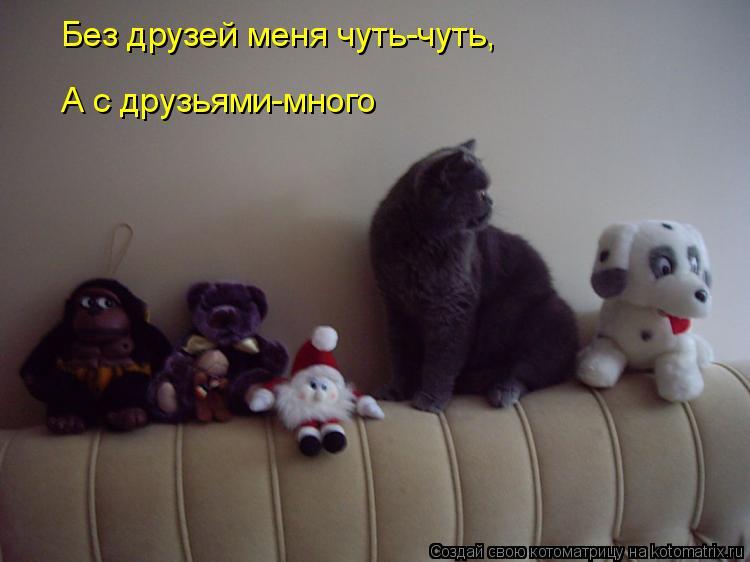 Котоматрица: Без друзей меня чуть-чуть, А с друзьями-много