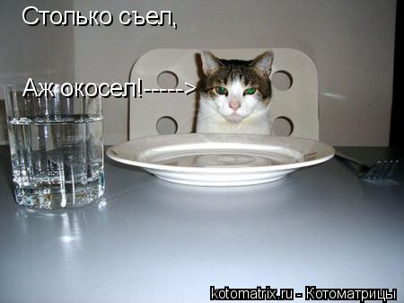 Котоматрица: Столько съел, Аж окосел!----->