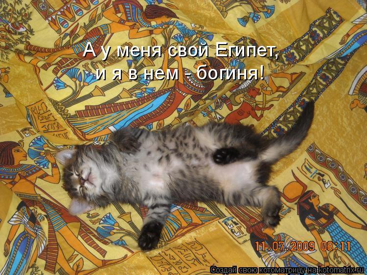 Котоматрица: А у меня свой Египет,  и я в нем - богиня!