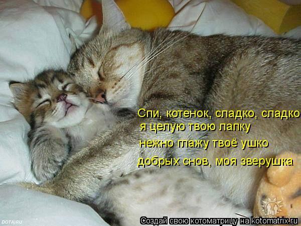 Котоматрица: Спи, котенок, сладко, сладко я целую твою лапку нежно глажу твоё ушко добрых снов, моя зверушка