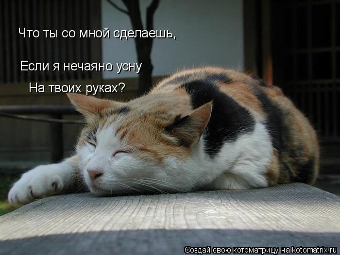 Котоматрица: Если я нечаяно усну                           На твоих руках?                           Что ты со мной сделаешь,