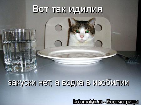 Котоматрица: Вот так идилия закуски нет, а водка в изобилии