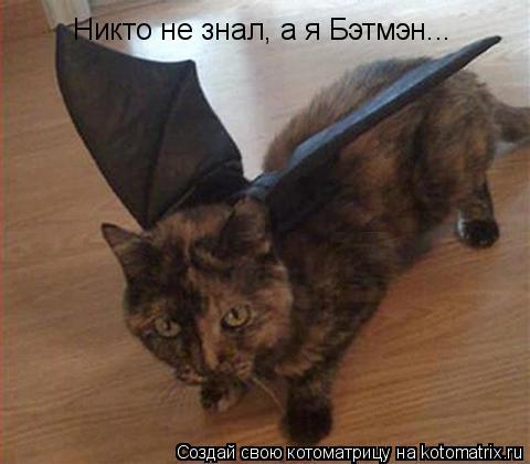 Котоматрица: Никто не знал, а я Бэтмэн...