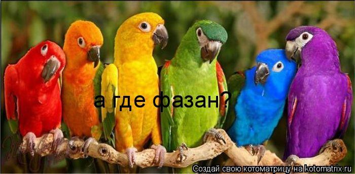 Котоматрица: а где фазан?