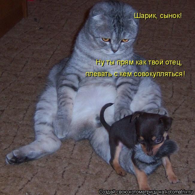 Котоматрица: Шарик, сынок!  Ну ты прям как твой отец,  плевать с кем совокупляться!