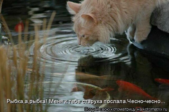 Котоматрица: Рыбка,а,рыбка! Меня к тебе старуха послала.Чесно-чесно...