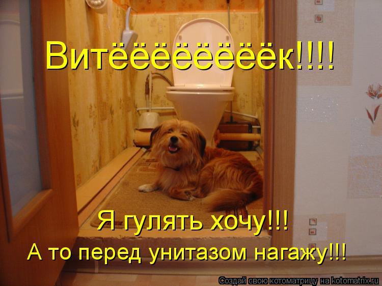 Котоматрица: Витёёёёёёёёк!!!! Я гулять хочу!!! А то перед унитазом нагажу!!!