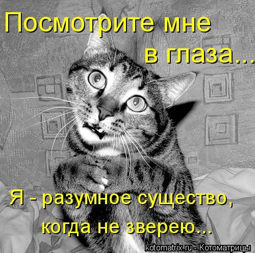 Котоматрица: Посмотрите мне в глаза... Я - разумное существо, когда не зверею...