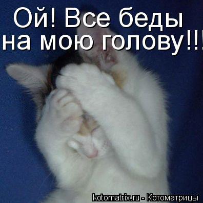 Котоматрица: Ой! Все беды на мою голову!!!