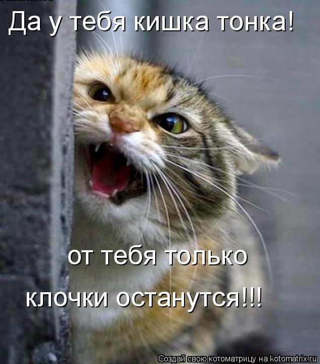 Котоматрица: Да у тебя кишка тонка! от тебя только клочки останутся!!!