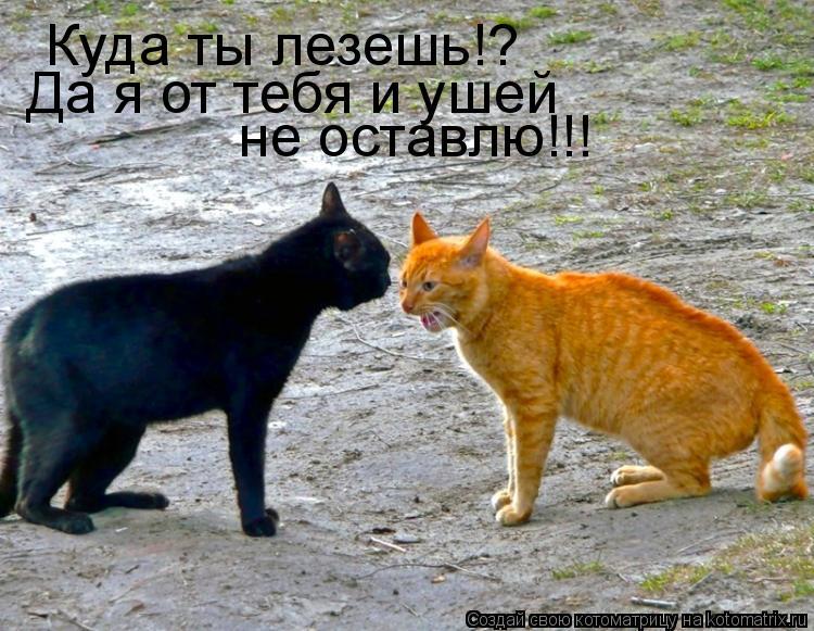 Котоматрица: Куда ты лезешь!? Да я от тебя и ушей не оставлю!!!