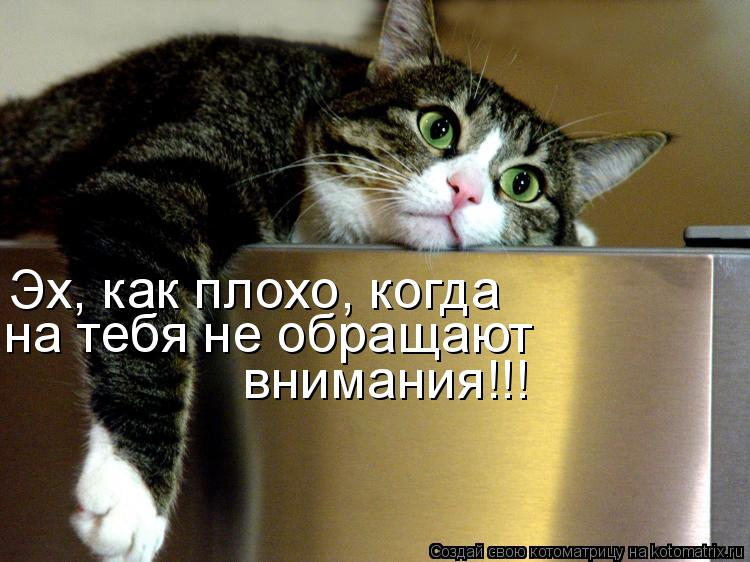 Котоматрица: Эх, как плохо, когда  на тебя не обращают  внимания!!!