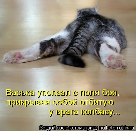 Котоматрица: Васька уползал с поля боя, прикрывая собой отбитую у врага колбасу...
