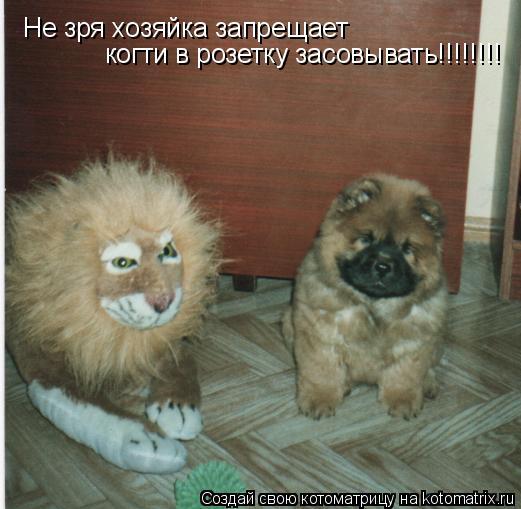 Котоматрица: Не зря хозяйка запрещает  когти в розетку засовывать!!!!!!!!