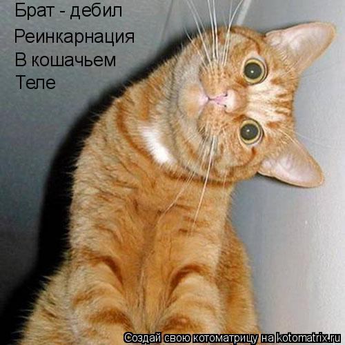 Котоматрица: Брат - дебил Реинкарнация В кошачьем Теле