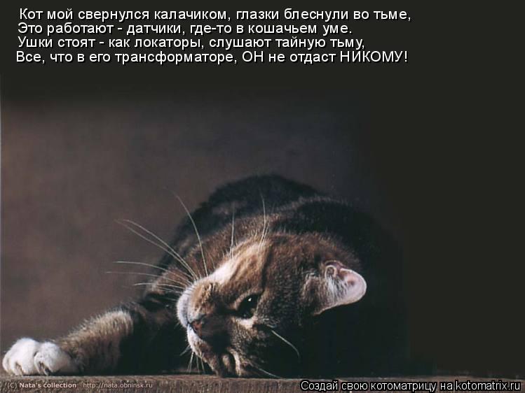 Котоматрица: Кот мой свернулся калачиком, глазки блеснули во тьме, Это работают - датчики, где-то в кошачьем уме. Ушки стоят - как локаторы, слушают тайную